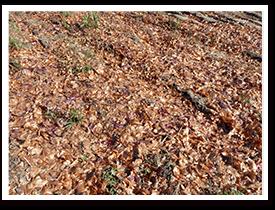 淡路ゆうき耕房の納豆菌栽培のようす